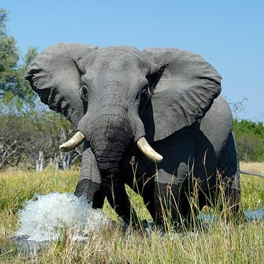 Botswana Salvaje | Viajes Planeta Azul