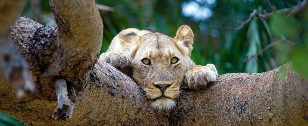 | Safaris in Africa | Viajes Planeta Azul