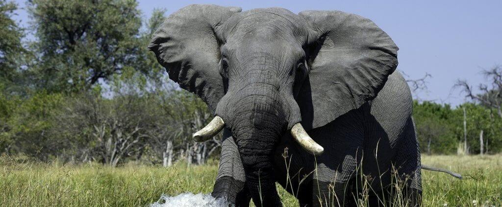 Botswana Salvaje | Botswana Salvaje | Viajes Planeta Azul