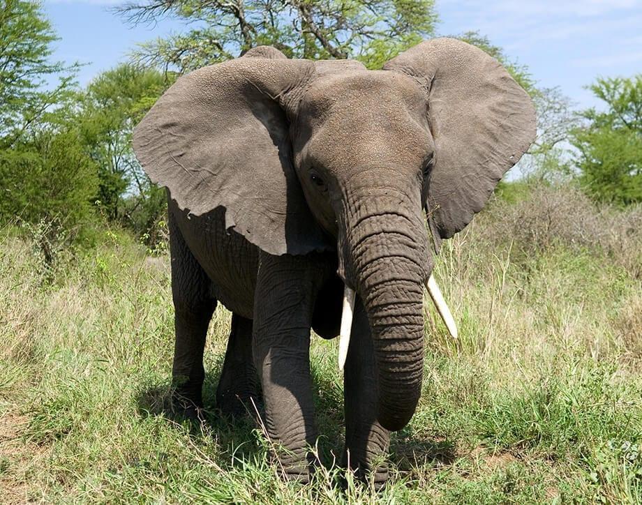 Mi primer safari | Viajes Planeta Azul