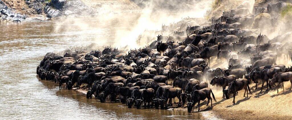 La Gran Migración | La Gran Migración | Viajes Planeta Azul