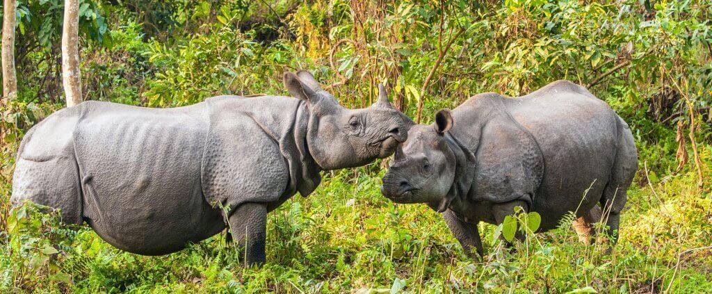 India's Wild Side | India's Wild Side | Viajes Planeta Azul