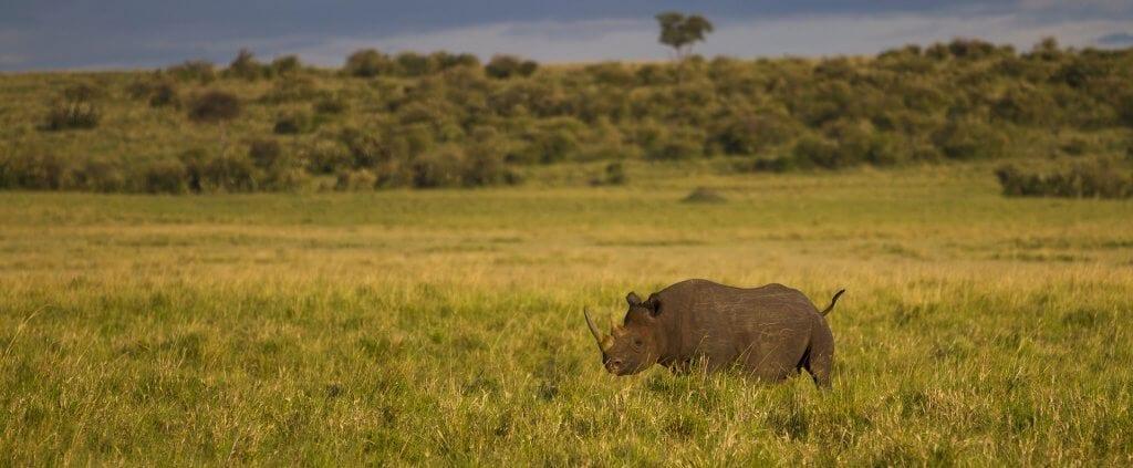 Kenya | Kenya | Viajes Planeta Azul