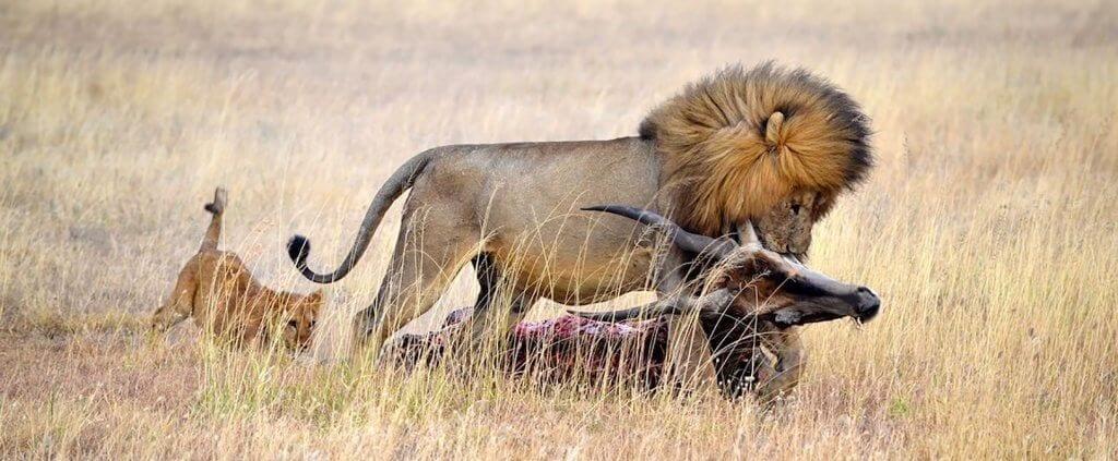 EL Mejor Safari de África | El Mejor Safari de África | Viajes Planeta Azul