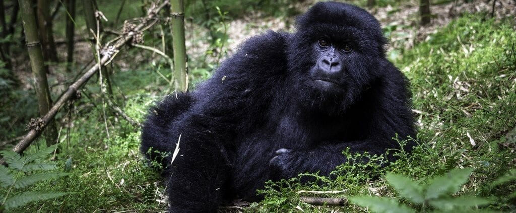 | Safaris en África | Viajes Planeta Azul