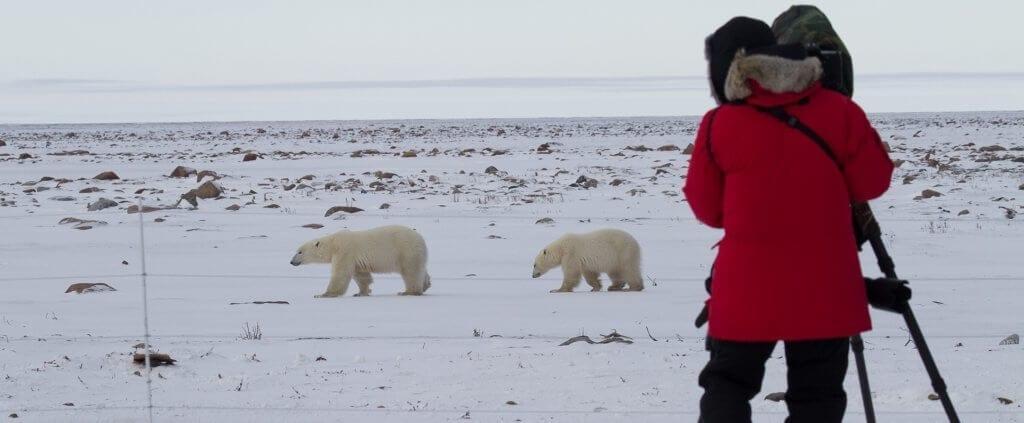 Polar Bears | Polar Bears | Viajes Planeta Azul