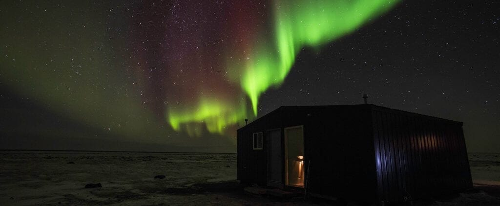 Osos Polares | Osos Polares | Viajes Planeta Azul