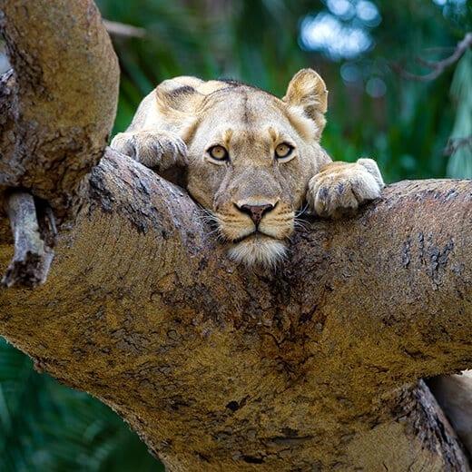 Safari Austral | Viajes Planeta Azul