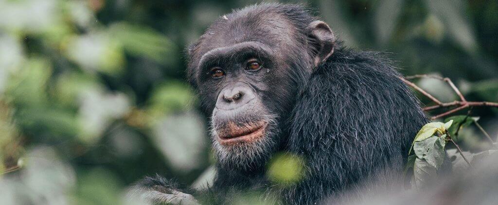 Uganda | Uganda | Viajes Planeta Azul