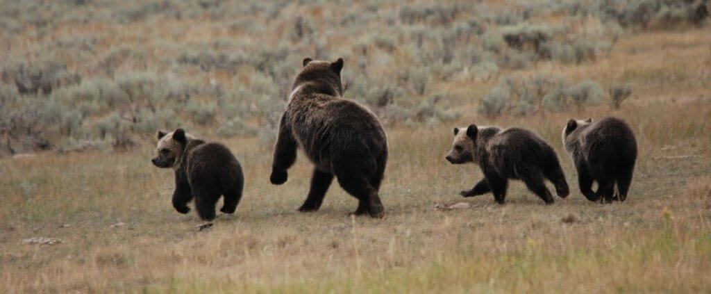 Yellowstone | Yellowstone | Viajes Planeta Azul