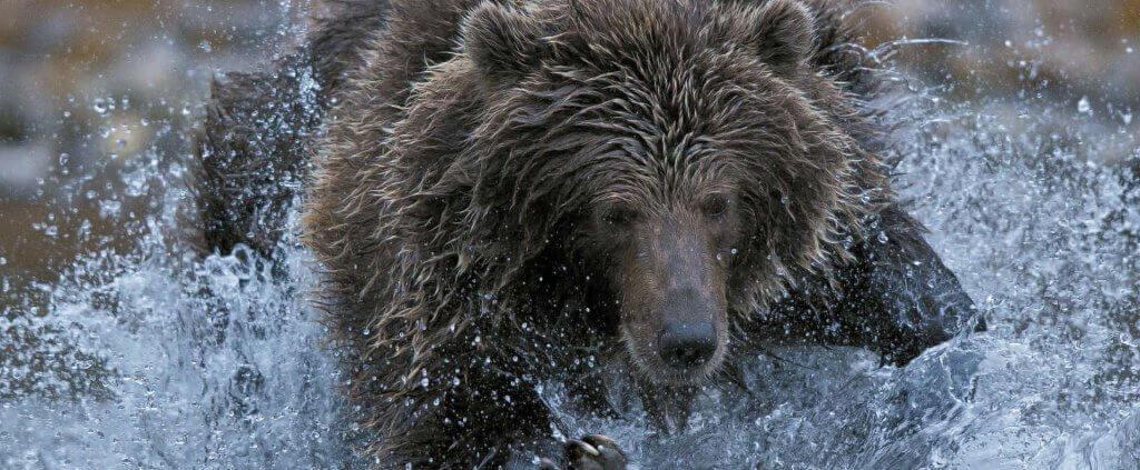 En tierra de osos | En Tierra de Osos | Viajes Planeta Azul