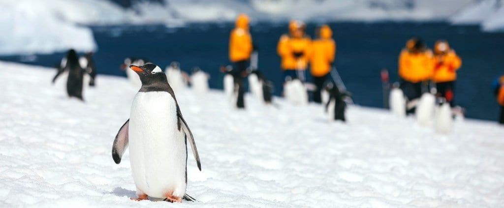 Antártida | Antártida | Viajes Planeta Azul